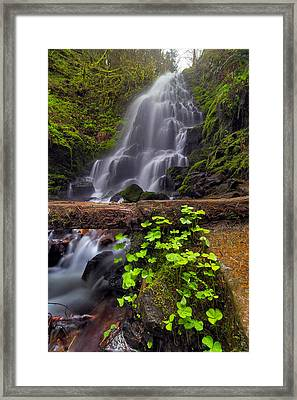 Fairy Falls In Spring Framed Print by David Gn