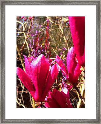 Fairy Fire Framed Print