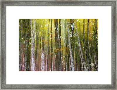 Fairy Forest I Framed Print