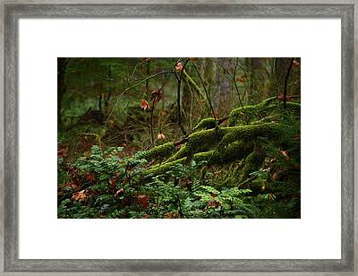 Fairy Forest Framed Print