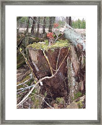 Fairy House On Stump Framed Print