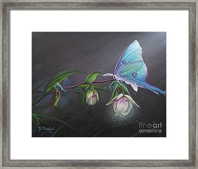 Fairy Lantern's Glow Framed Print by Joe Mandrick