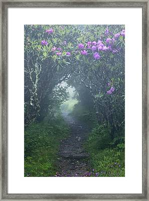 Fairy Path Framed Print