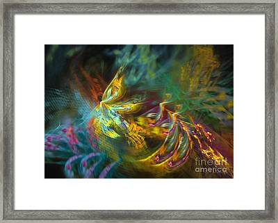 Fairy Framed Print by Sipo Liimatainen