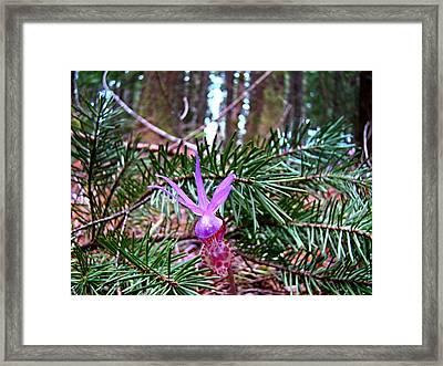 Fairy Slipper  Framed Print