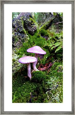 Fairy Tail Mushrooms Framed Print by Brook Burling