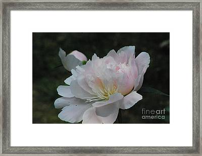 Fairy Tale Bloom Framed Print by Sharen Duffing