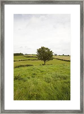 Fairy Tree In Ireland Framed Print by Ian Middleton