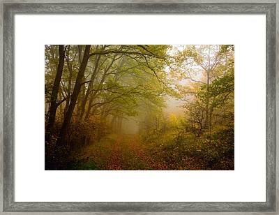 Fairy Wood Framed Print by Evgeni Dinev