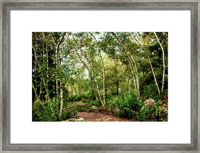 Fairy Woodlands Framed Print by Sheryl Thomas