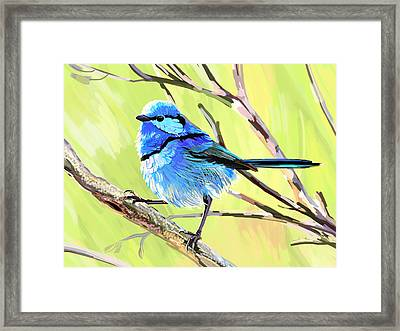 Fairy Wren II Framed Print by Plum Ovelgonne