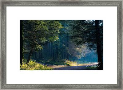 Fairytale Woods Framed Print