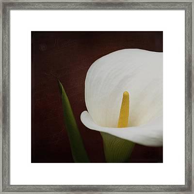 Faith - Flower Art Framed Print