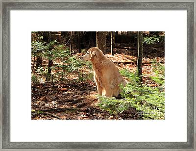 Faithful Companion Always Framed Print