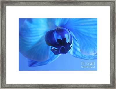 Faithfully Blue Framed Print