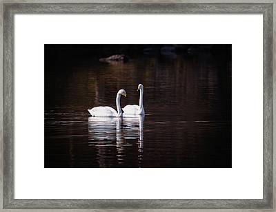 Framed Print featuring the photograph Faithfulness by Ari Salmela