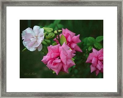 Fake Painting Of Roses Framed Print