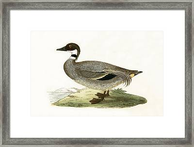 Falcated Teal Framed Print