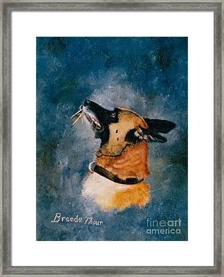 Falco Framed Print by Brenda Thour