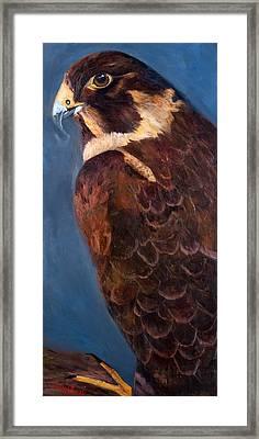 Falcon Framed Print by Jan Holman