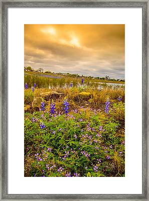 Zapata Falcon Lake 2 Framed Print by Leticia Latocki