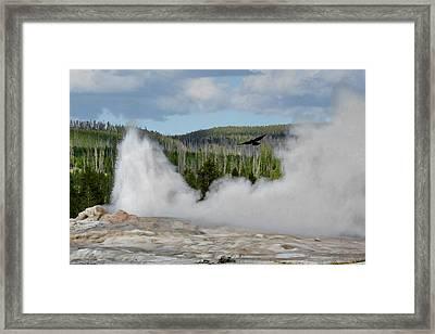 Falcon Over Old Faithful - Geyser Yellowstone National Park Wy Usa Framed Print by Christine Till