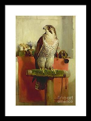 Falcon Framed Prints