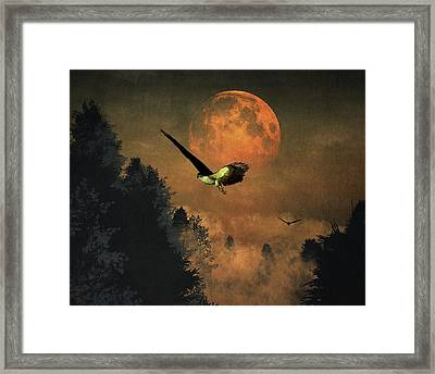 Falcons Hunting In The Evening Framed Print