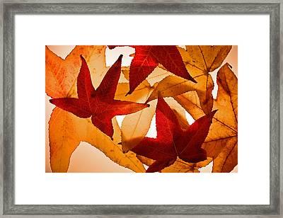 Fall 002 Framed Print by Bobby Villapando