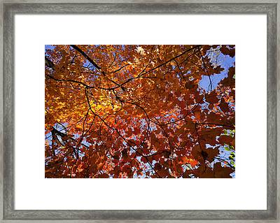 Fall 2010 14 Framed Print