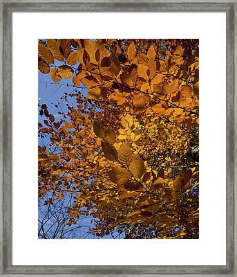 Fall 2010 51 Framed Print by Robert Ullmann
