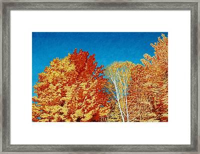 Fall Framed Print by Allan OMarra
