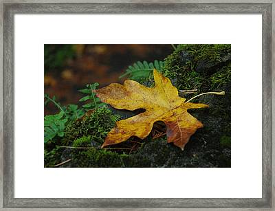 Fall Alone Framed Print by Lori Mellen-Pagliaro