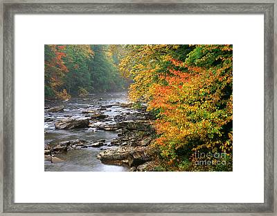 Fall Along The Cranberry River Framed Print by Thomas R Fletcher
