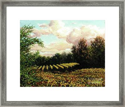 Fall Ambers Framed Print by Carl Downey