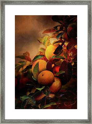 Fall Apples A Living Still Life Framed Print by Theresa Campbell