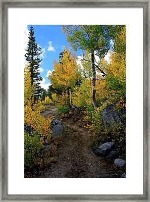 Fall Aspens In The Eastern Sierra Framed Print