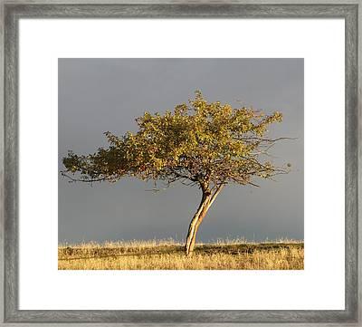 Fall At The Crabapple Tree Framed Print