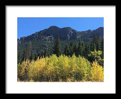 Fall Aspen Framed Prints