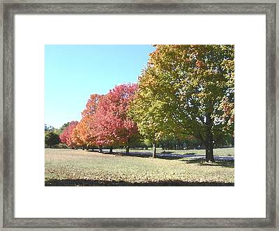 Fall Framed Print by Audrey Venute