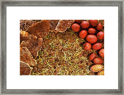 Fall Background Framed Print