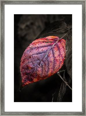 Fall Beech Leaf Framed Print