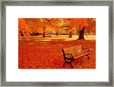 Fall Bench  Newburyport Ma Framed Print by Suzanne DeGeorge