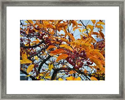 Fall Berries Framed Print