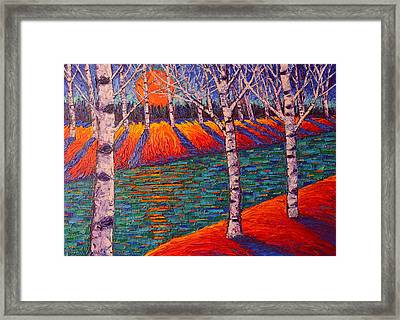Fall Birches At Sunrise Contemporary Impressionist Palette Knife Oil Painting By Ana Maria Edulescu Framed Print by Ana Maria Edulescu