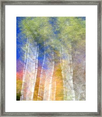 Fall Birches Framed Print by Doug Hockman Photography