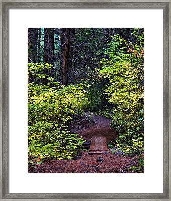 Metolius River Trail Fall Bridge Framed Print