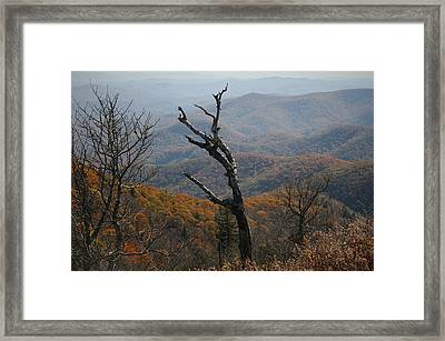 Fall Framed Print by Cathy Harper