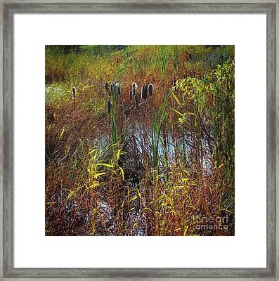Fall Cattails Framed Print