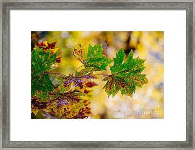 Fall Changes Everything Framed Print by MaryJane Armstrong